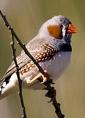 Eloge des oiseaux