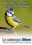 Leclerc de Buffon: Histoire naturelle des oiseaux-La Mésange Bleue